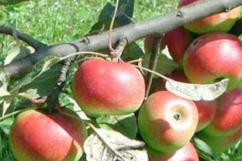 Scopri                                      Frutta: i colori delle Marche