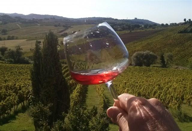 wine trekking piceno