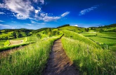 Scopri il pacchetto: Monti Sibillini: picnic al tramonto e passeggiata in ascolto del bosco...