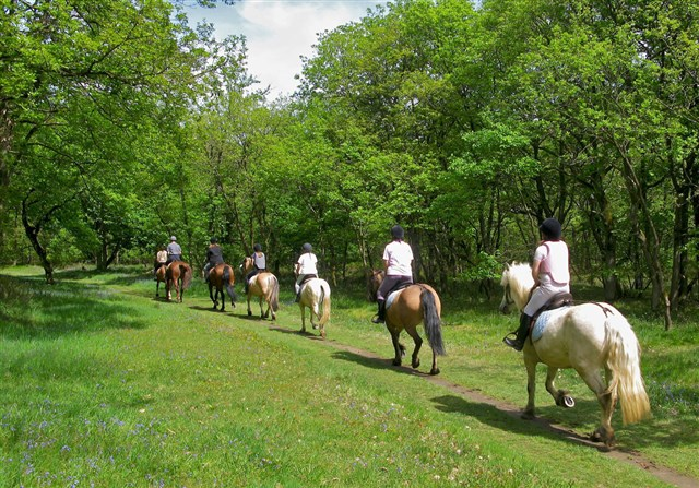 Discover the holiday package: HORSE RIDING