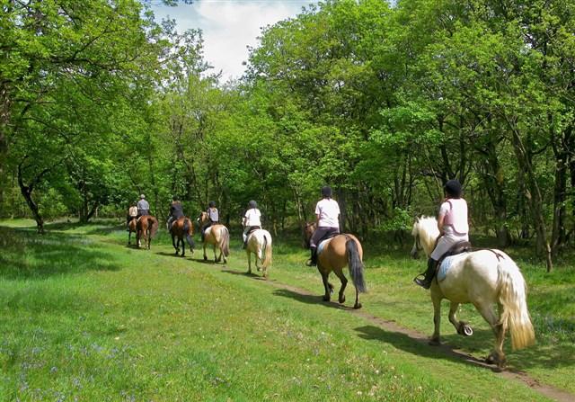 passeggiate-cavallo-2