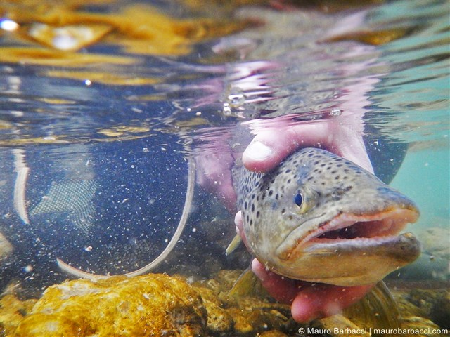 Marche Holiday Fly Fishing