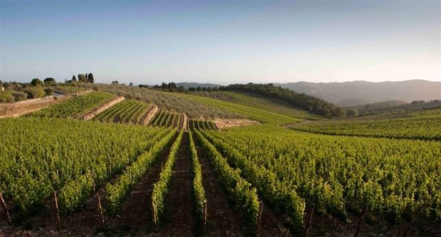 Tradizioni e vino del Piceno