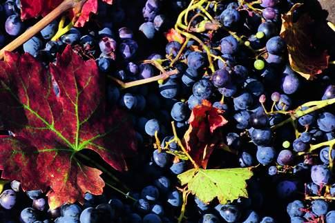 Scopri il percorso cicloturistico Terra di vini pregiati