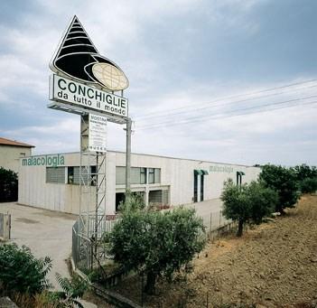 Scopri le attrazioni di Cupra Marittima - Museo Malacologico Piceno