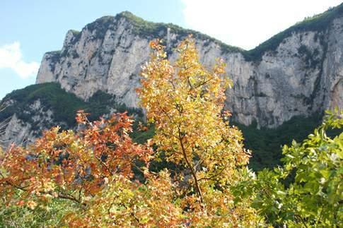 Roverelle in autunno