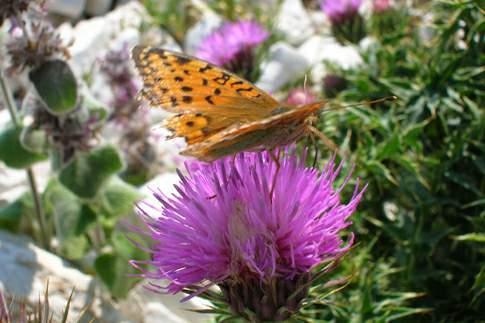 Flora e Fauna nel Parco Nazionale dei Monti Sibillini