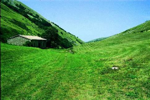 Scopri le attrazioni di Riserva Naturale Statale Montagna di Torricchio