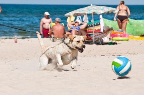 Scopri l'itinerario: Spiagge Dog-Friendly